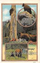 ber002185 - Bears Rainier National Park Postcard Post Card