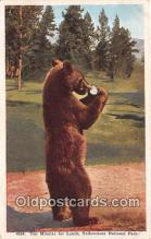 ber002186 - Yellowstone National Park Postcard Post Card