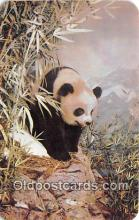 ber002195 - Giant Panda American Museum of Natural History, NY Postcard Post Card