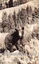 ber002200 - Real Photo - Bruin Wisconsin Northwoods Postcard Post Card