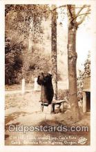 ber002204 - Real Photo - Teddy Drinking Pop Columbia River Highway, Oregon Postcard Post Card