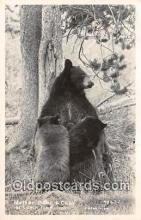 ber002213 - Mother Bear & Cubs JH Eastman Postcard Post Card