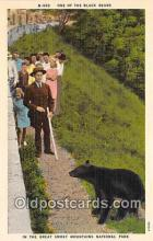 ber002226 - Black Bears Great Smoky Mountains National Park Postcard Post Card