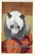 ber002234 - Mei-Mei Giant Panda Chicago Zoological Park, Brookfield, Ill Postcard Post Card
