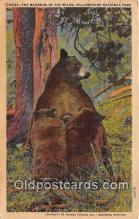 ber002236 - Madonna of the Wilds Yellowstone National Park, USA Postcard Post Card