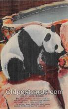 ber002239 - Giant Panda Zoo St Louis, Missouri, USA Postcard Post Card