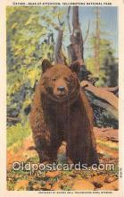 ber002240 - Bear at Attention Yellowstone National Park, Wyoming, USA Postcard Post Card