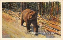 ber002252 - Bears, Vintage Collectable Postcards