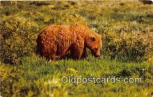 ber002254 - Bears, Vintage Collectable Postcards