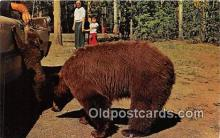 ber002256 - Bears, Vintage Collectable Postcards