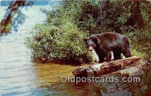 ber002257 - Bears, Vintage Collectable Postcards