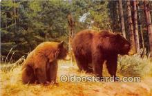 ber002259 - Bears, Vintage Collectable Postcards