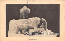 ber002270 - Bears, Vintage Collectable Postcards