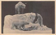 ber002271 - Bears, Vintage Collectable Postcards