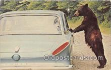 ber002281 - Bears, Vintage Collectable Postcards
