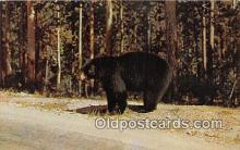 ber002283 - Bears, Vintage Collectable Postcards