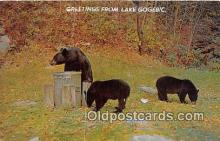 ber002284 - Bears, Vintage Collectable Postcards