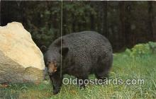 ber002285 - Bears, Vintage Collectable Postcards