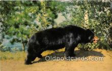 ber002288 - Bears, Vintage Collectable Postcards