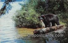ber002289 - Bears, Vintage Collectable Postcards