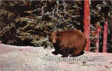 ber002290 - Bears, Vintage Collectable Postcards