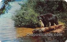 ber002291 - Bears, Vintage Collectable Postcards