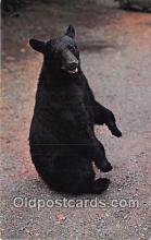 ber002298 - Bears, Vintage Collectable Postcards