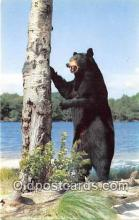 ber002299 - Bears, Vintage Collectable Postcards