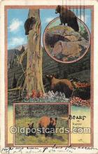 ber002300 - Bears, Vintage Collectable Postcards