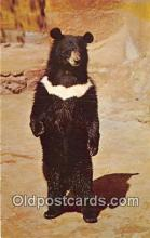 ber002307 - Bears, Vintage Collectable Postcards