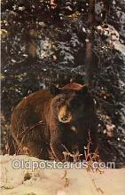 ber002309 - Bears, Vintage Collectable Postcards