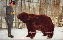 ber006051 - Bear Postcard