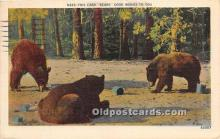 ber006056 - Bear Postcard