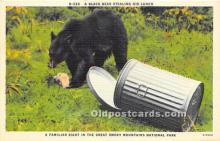ber006057 - Bear Postcard
