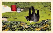 ber006059 - Bear Postcard