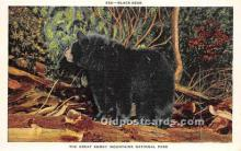 ber006060 - Bear Postcard