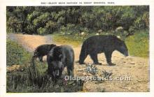 ber006061 - Bear Postcard