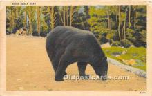 ber006063 - Bear Postcard