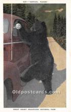 ber006064 - Bear Postcard