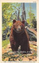 ber006065 - Bear Postcard