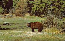 ber006068 - Bear Postcard