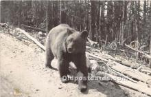 ber006069 - Bear Postcard