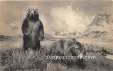 ber006071 - Bear Postcard