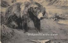 ber006072 - Bear Postcard