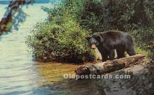 ber006073 - Bear Postcard