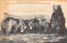 ber006077 - Bear Postcard