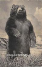 ber006078 - Bear Postcard