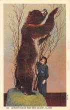 ber007419 - Bear Post Card Old Vintage Antique