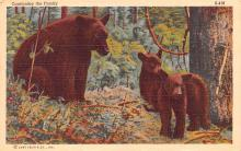 ber007425 - Bear Post Card Old Vintage Antique