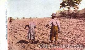bla001121 - Cotton Industry, Black Blacks Postcard Post Card